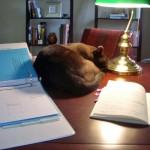 Ruff on desk