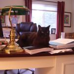 cat on desk